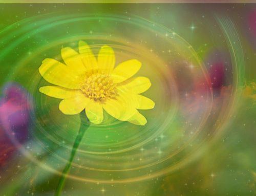 關於植物的靈魂.愛與思想
