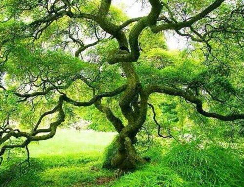 如何接通植物的神秘能量